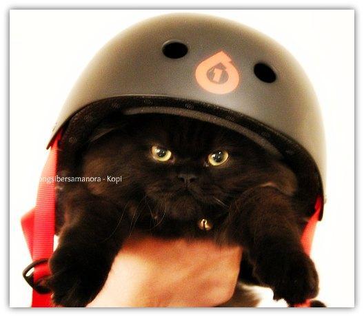 gambar anak kucing cute